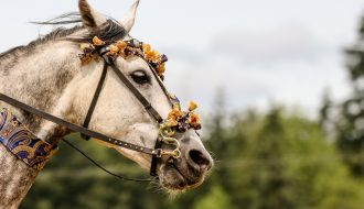 Can bitless bridles become the new normal?