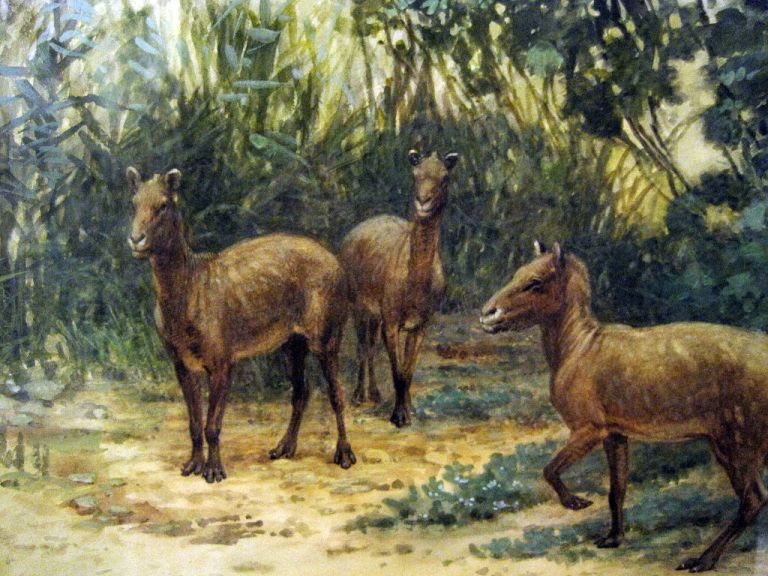 Three eohippus in the forest.