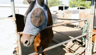 horse with a fly mask