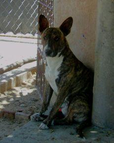 Perro en Cafayate