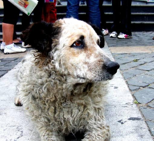 Hund in Valparaiso (Chile)