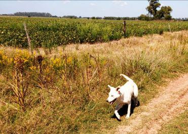 Blanca bei Spaziergang