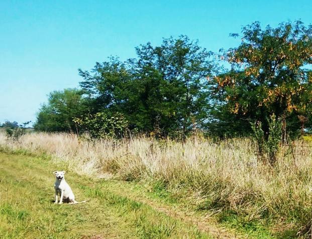 Spaziergang mit Blanca