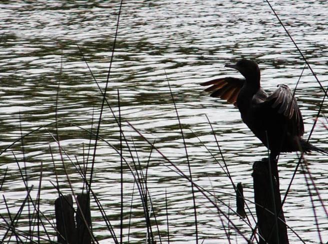 Vogel im Delta