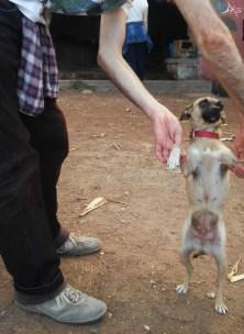 hund-finca-de-osorio-teror-las-palmas-5.jpg