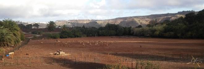landschaft-finca-de-osorio-teror-las-palmas.jpg