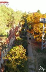 Zwischen einer Ruine der Beelitz-Heilstätten und dem Waldkronenpfad führt ein Weg am Boden entlang.