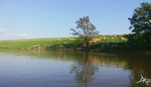 Saale-Flussabschnitt-Ploetzkau-Kanutour