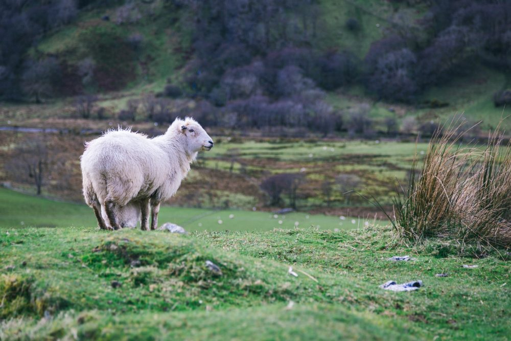 the wildlife in the pembrokeshire country park, South Wales