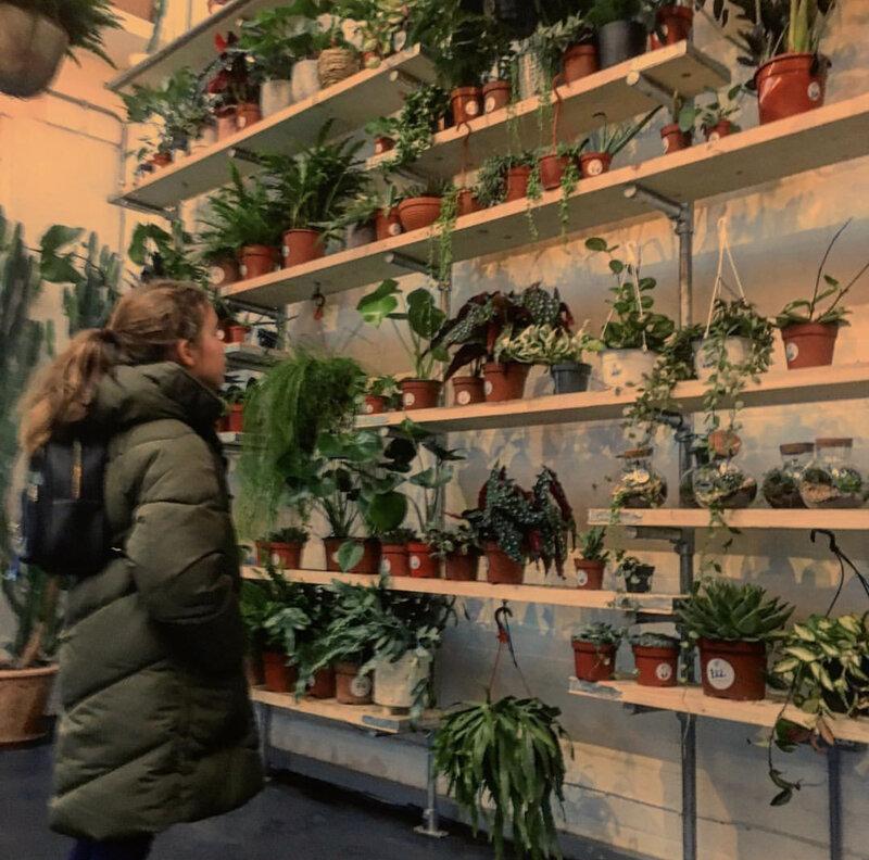The best plant shop in Sneinton, Nottingham - hidden gem