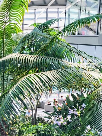 The Sky Garden London - secret spots to just sit and take in the beauty