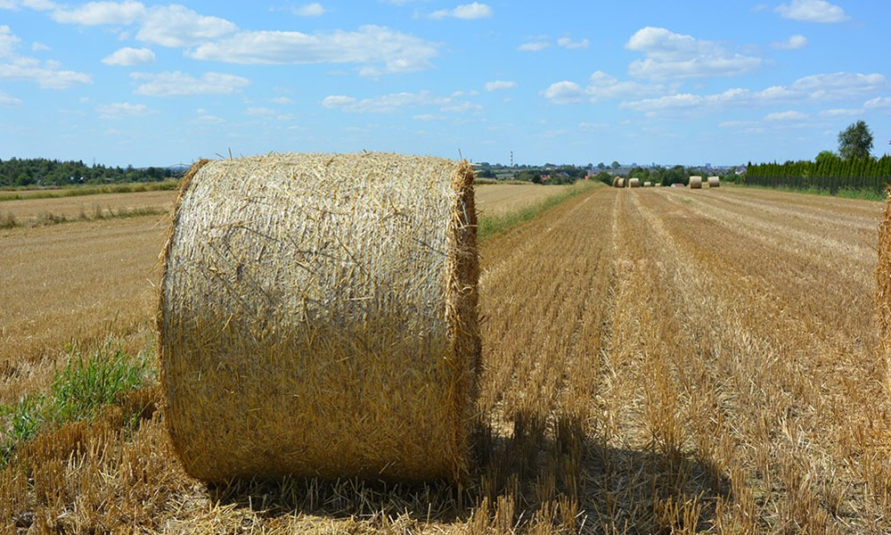Hay Bails in August Landscape