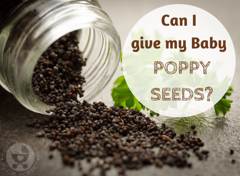 Poppy seeds or khus khus are a common ingredient in Indian kitchens. Since they're so commonplace, parents wonder: Can I give my Baby Poppy Seeds?