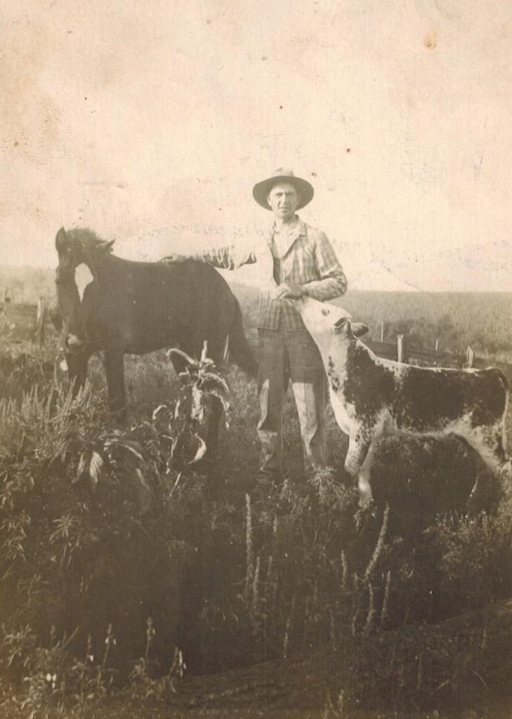 Grandpa post card with calves