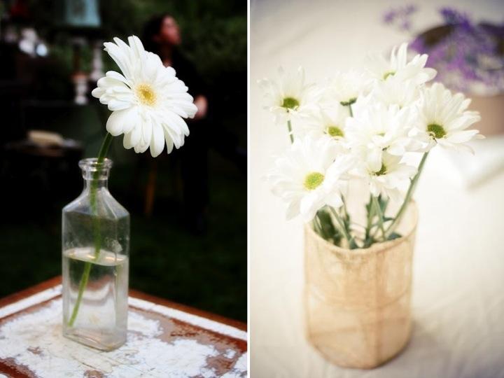Pretty little daisy ♥