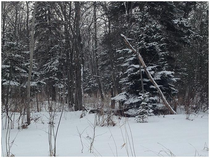 Canada holiday - Snow & Christmas!