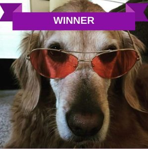 Shades for migraine pets category winner MHAM