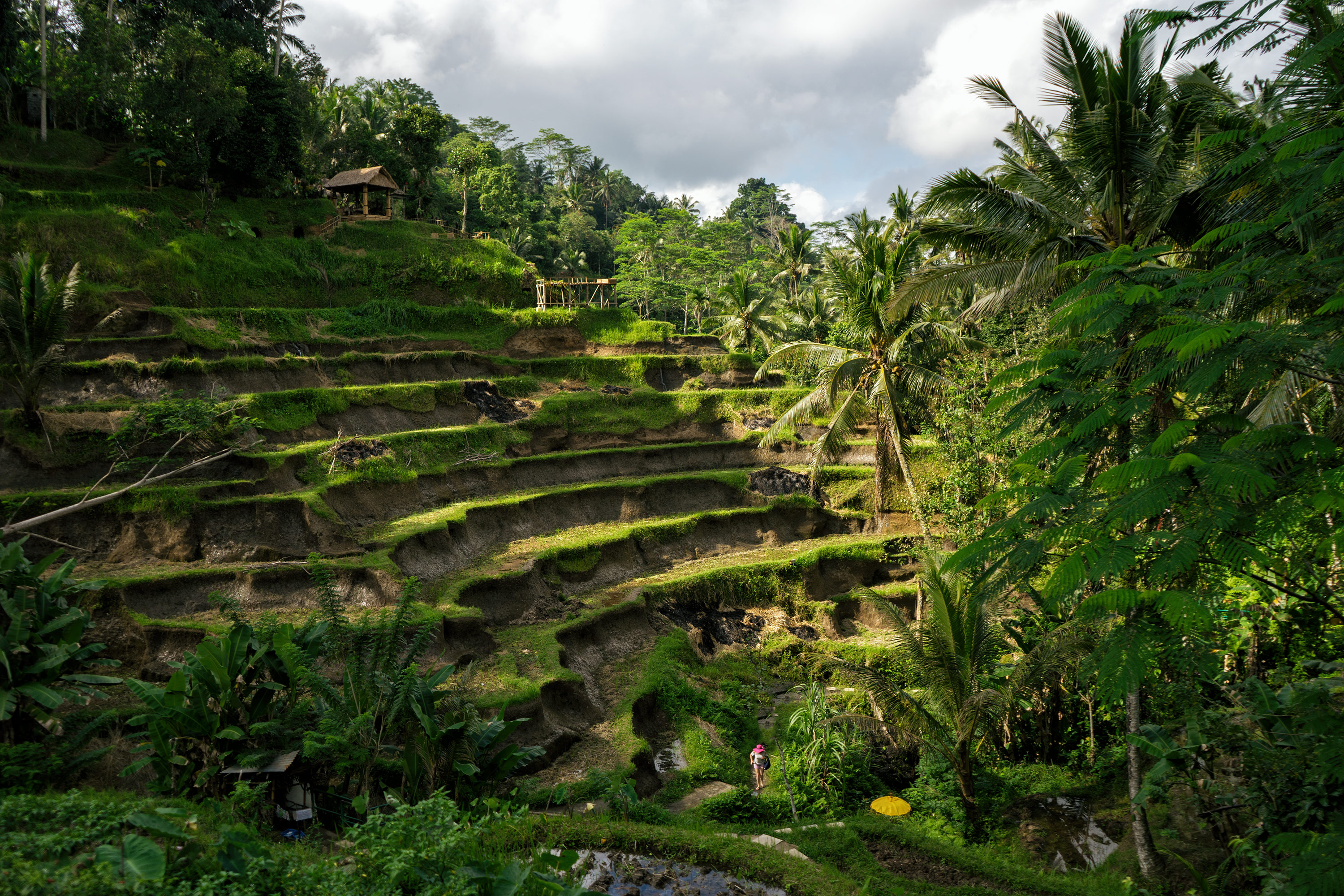 Bali Ubud Tegalalang Rice Terraces Views And Shadows