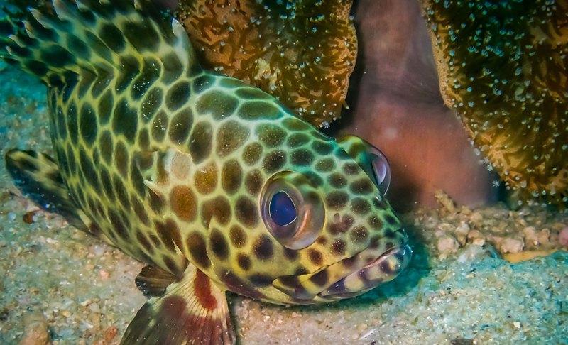 Friendly Fish Ko Phi Phi