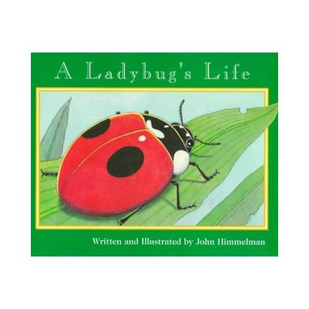 A Ladybug's Life book
