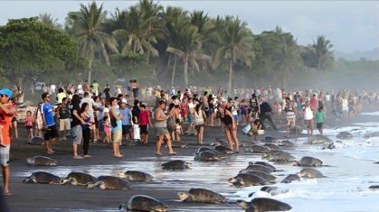 touristes-Costa-Rica-tortues-plage-092015