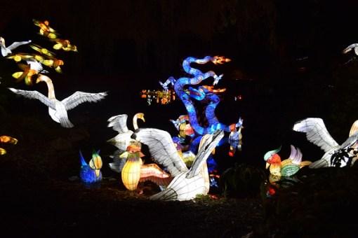 dragon-chine-jardinbotanique