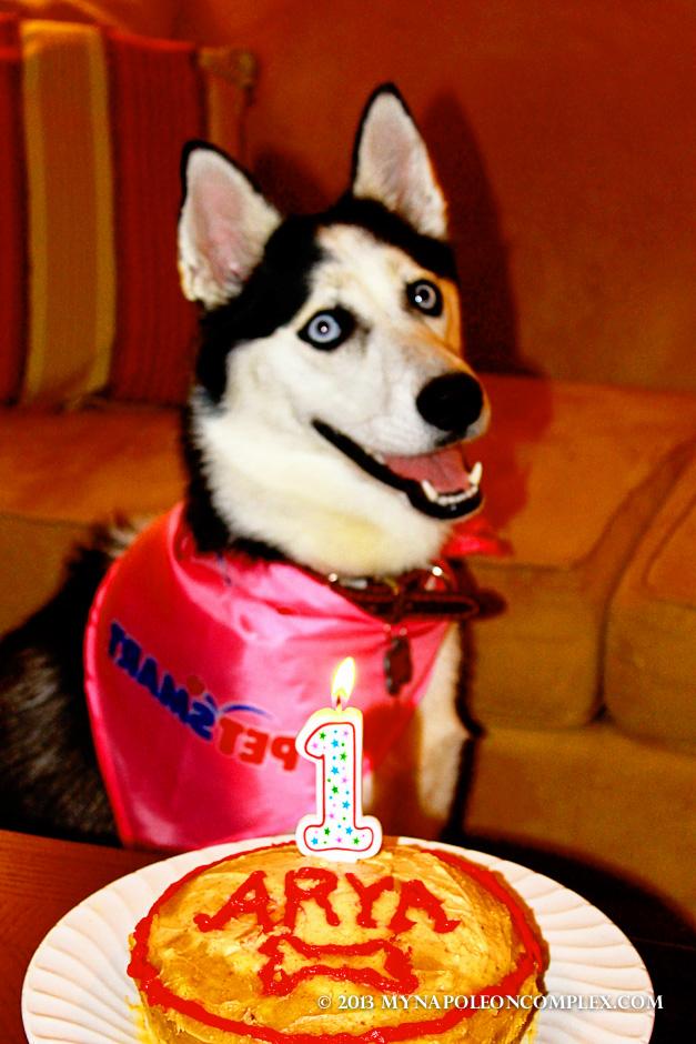 Siberian Husky, homemade Dog Birthday cake