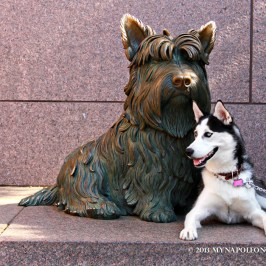 Statue of Fala, FDR's dog in Roosevelt Memorial.