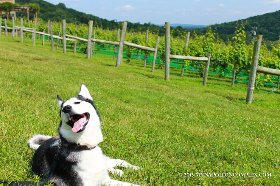 Virginia Wine Country-04