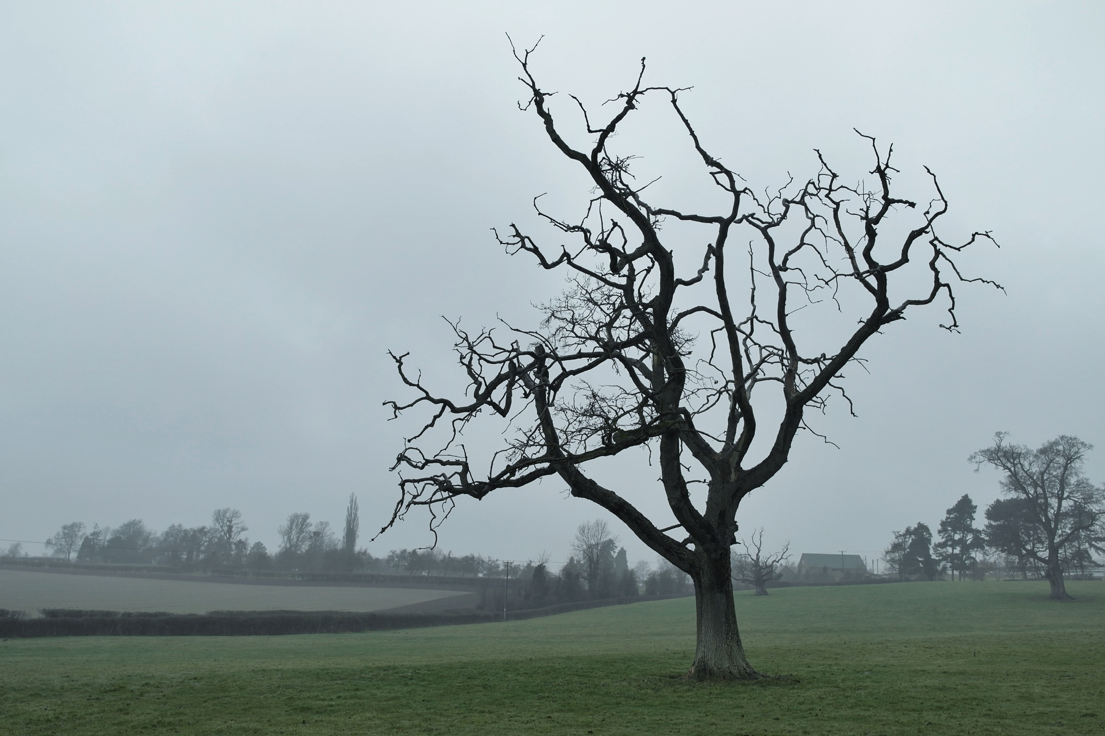 Image result for bare tree