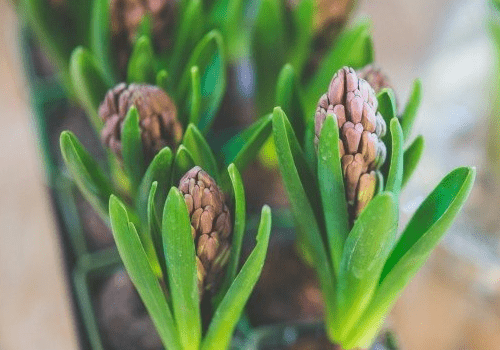 The 5 Best Flowering Plants Suitable for Office