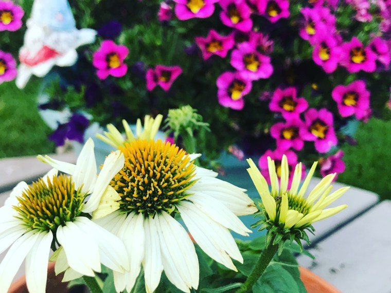 Coneflower | MyOtherMoreExcitingSelf.com