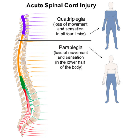 spinal-cord-levels