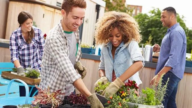 ot-mental-health-garden
