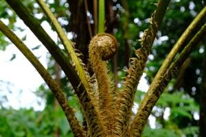 chute du carbet vegetation