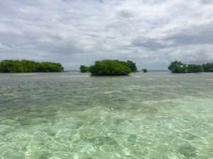 îlet de mangroves