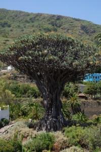 jardin botanique El Draguo