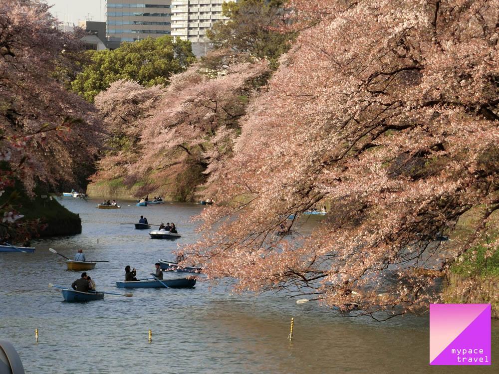 (2018年2月17日更新)2018日本櫻花前線予想,5大主要天氣予想機構已全數發布今年櫻花予想。