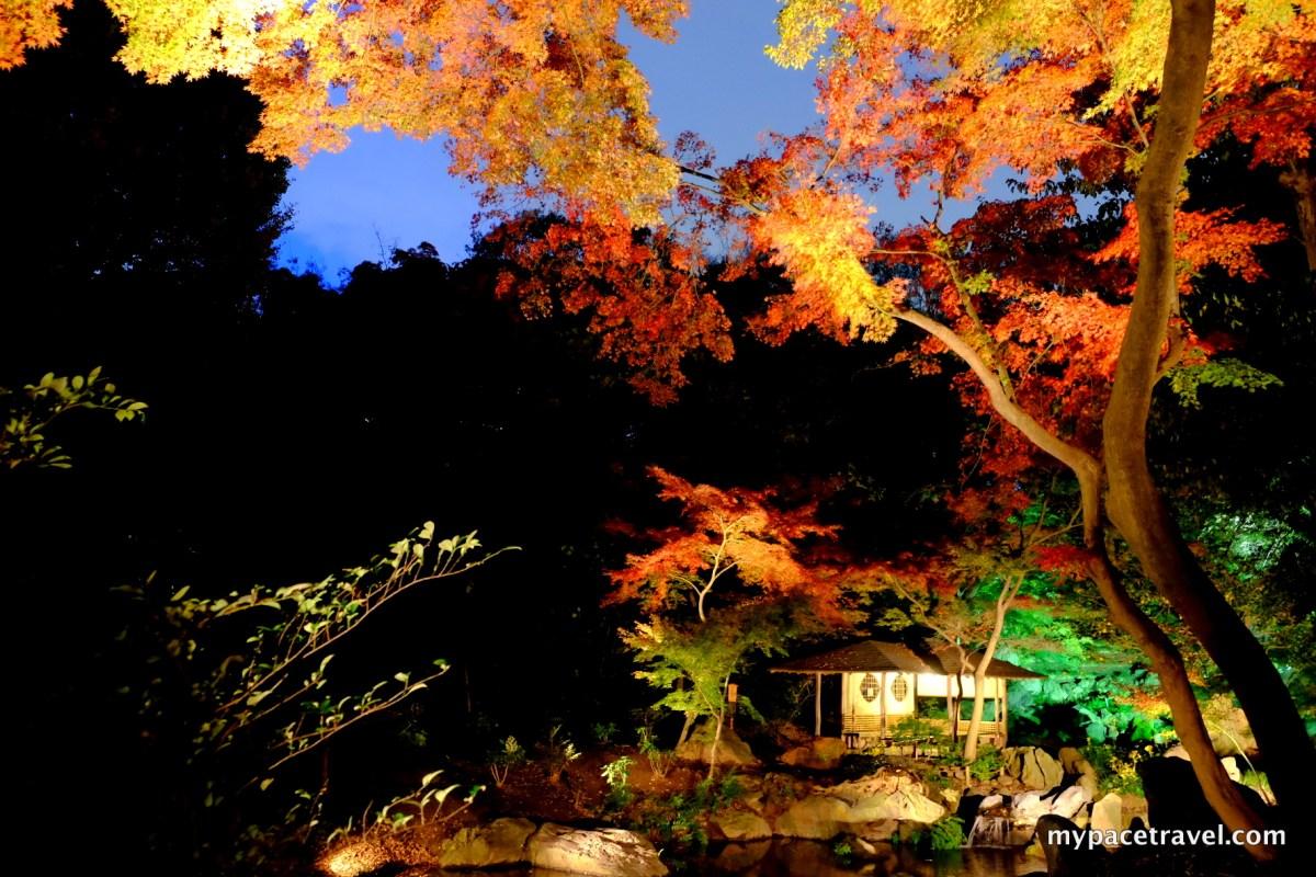 (多相)現場直擊!東京必看人氣第一的都內夜楓LIGHTUP名所:「六義園」。