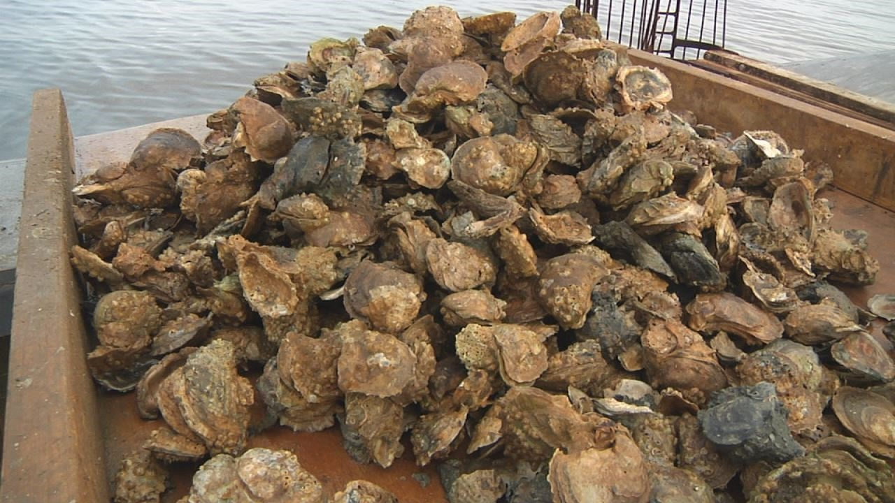 oyster pic 2_1462480353167.jpg