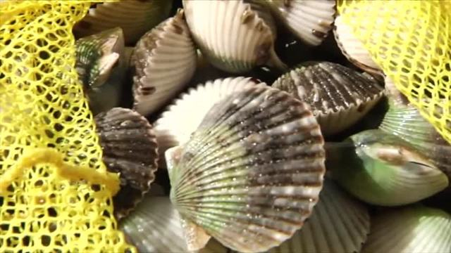 Scallop Season Preview_24170751_ver1.0_640_360_1505939794623.jpg