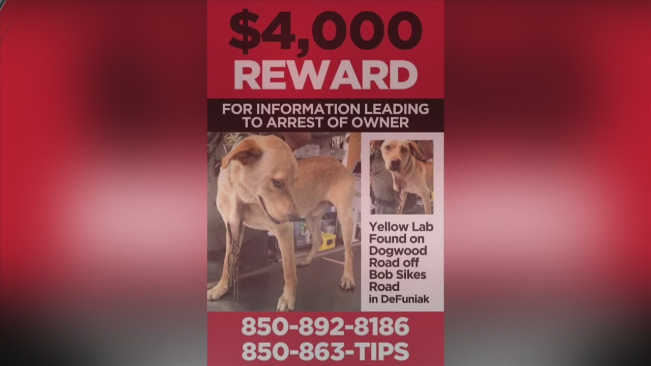 $4,000 REWARD FOR INFO ON ANIMAL ABUSE