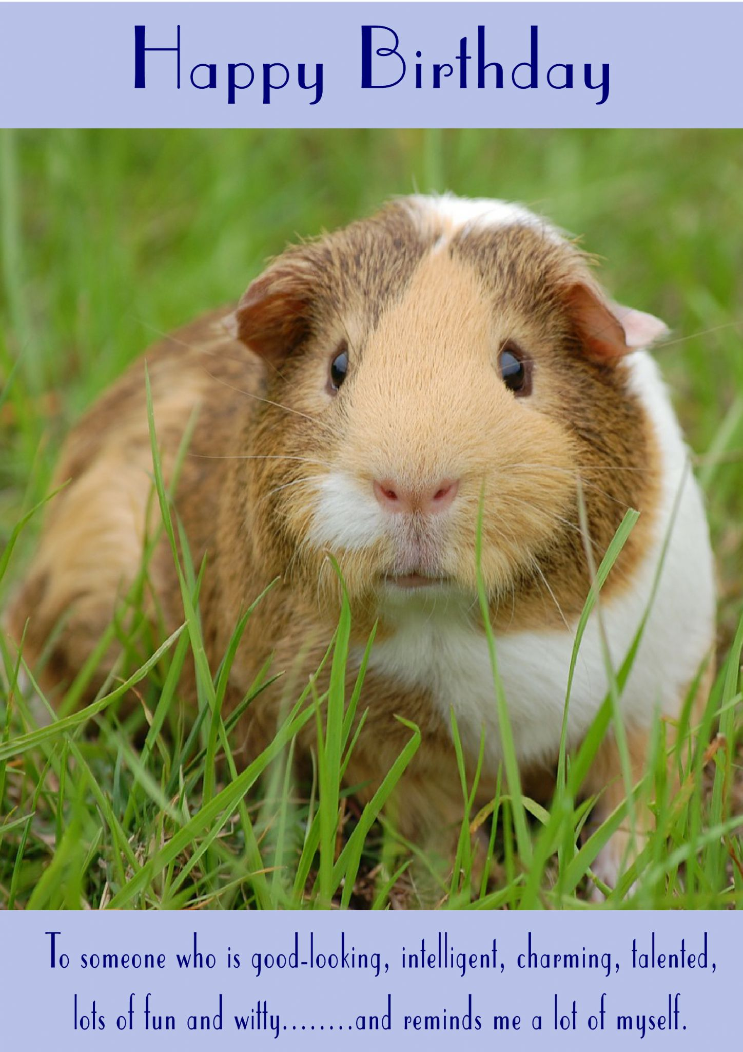 Guinea Pig Happy Birthday Reminds Me A Lot Of Myself Theme