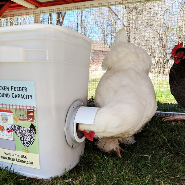 Chicken Supplies Fencing