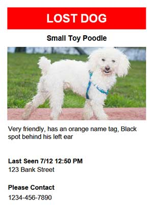 lost found poster templates for dogs
