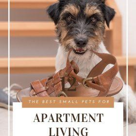 Pets For Apartments Small Pet Carrier