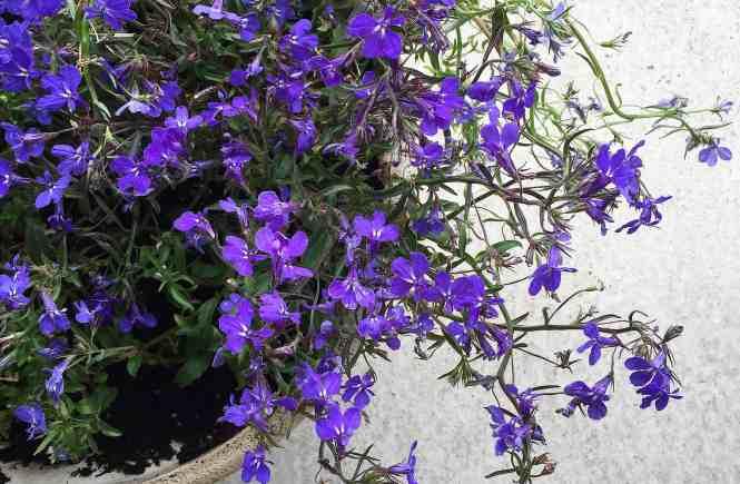 Garden | www.mypetitejoys.com