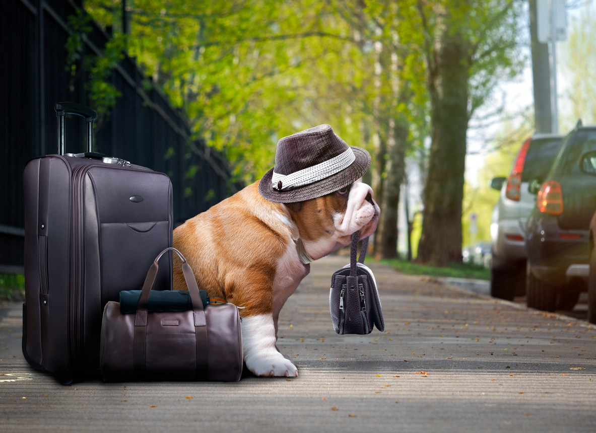Travel Happy and Healthy With Your Pet
