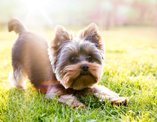 What Your Dog's Breed or Mouth Conformation Might Mean for Their Dental Health