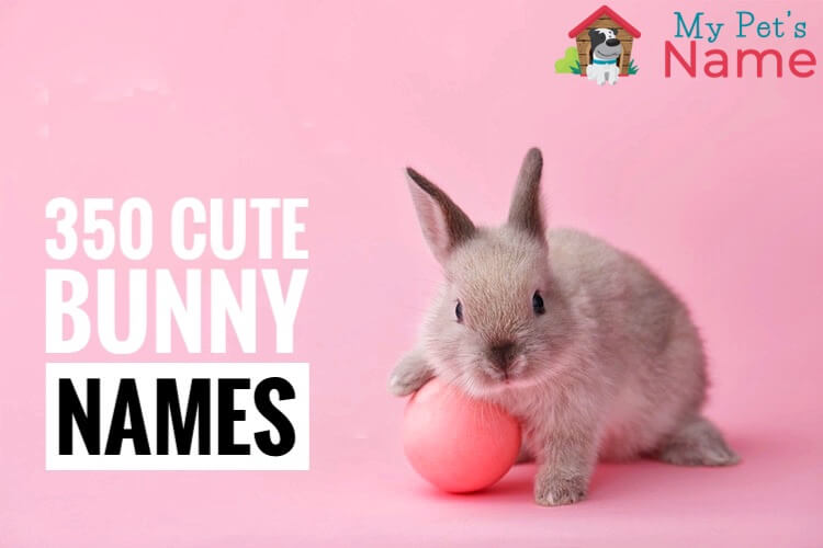 Bunny Names 350 Most Popular Rabbit Names My Pet S Name